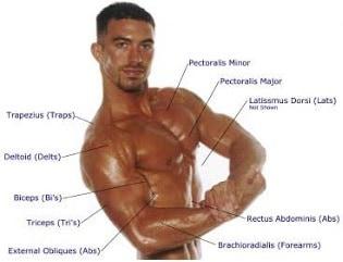 20 Makanan Pembentuk Otot Tubuh Pria Paling Cepat
