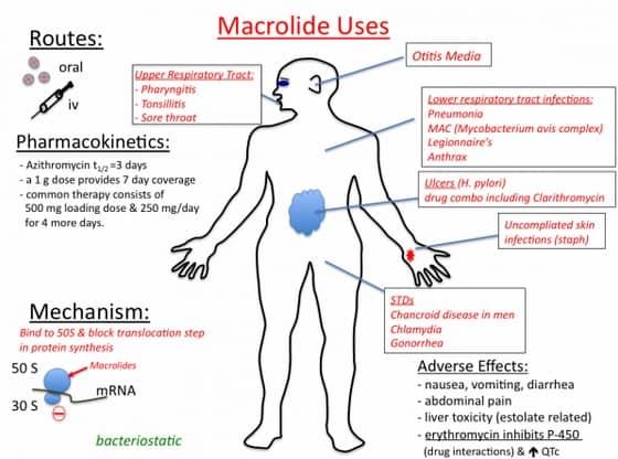 reaksi biosintesis steroid