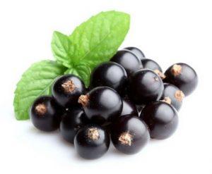 buah vitamin c - Blackcurrant