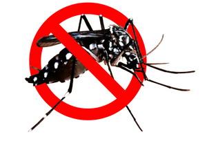 12 Cara Mencegah Demam Berdarah Dengue