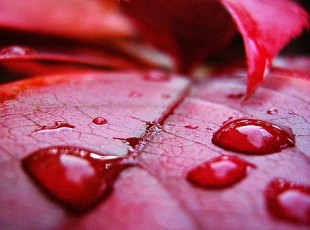 gejala darah kental