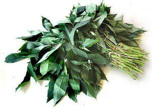 khasiat daun singkong