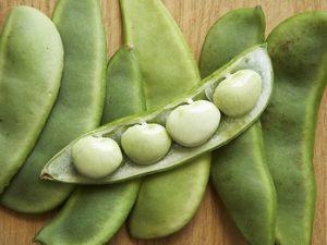 kacang lima