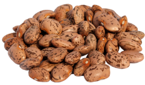 kacang pinto