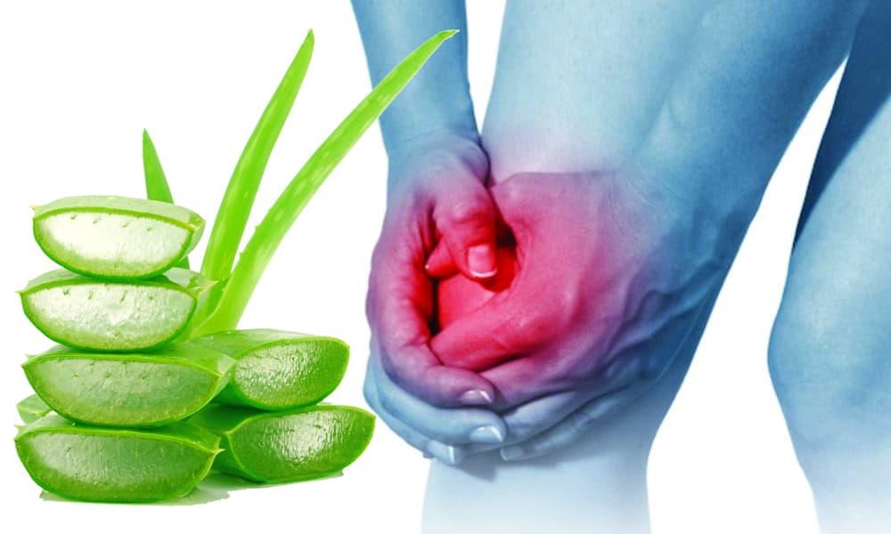 Punya Arthritis? Lidah Buaya Bisa Jadi Solusi dengan 7 Cara Ini