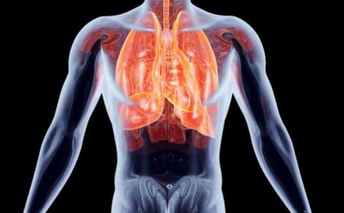 Inilah 5 Makanan yang Bisa Menjaga Kesehatan Organ Pencernaan