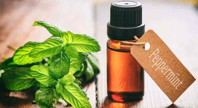 Minyak Peppermint Sehat Untuk Rambut, Intip 5 Manfaatnya
