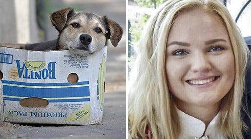 Wanita Norwegia Ini Kehilangan Nyawa Usai Menolong Seekor Anak Anjing