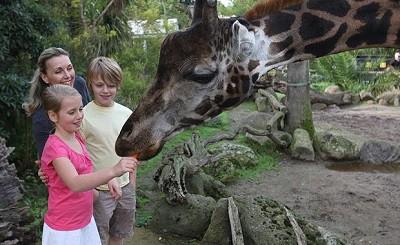 Anak 2 Tahun Meninggal Setelah Pulang dari Kebun Binatang di San Diego, Ini Penyebabnya!