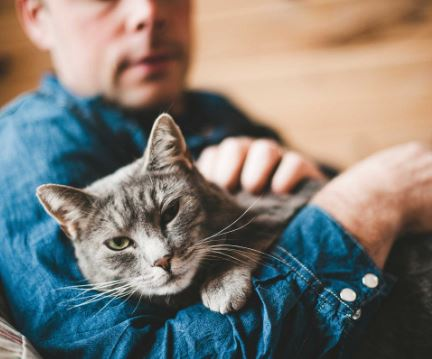 Aksi Pria Makan Kucing, Ada Gangguan Kejiwaan Apa di Baliknya?