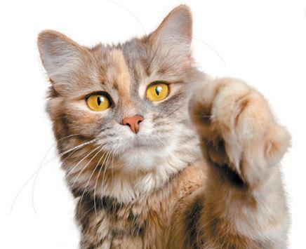 Karena Dicakar Kucing Peliharaan, Wanita 65 Tahun Ini Sempat Alami Koma